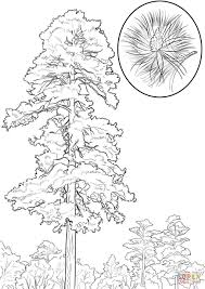 red pine tree coloring page free printable coloring pages