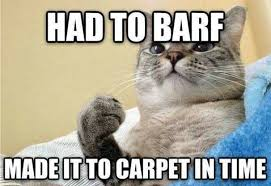 Carpet Cleaning Meme - when should carpets be cleaned kwik dry carpet and upholstery cleaning