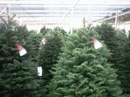 best places to buy christmas trees in montreal without leaving the