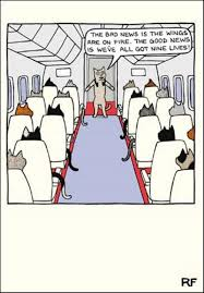 funny cat nine lives cartoon cat humour greeting car cards
