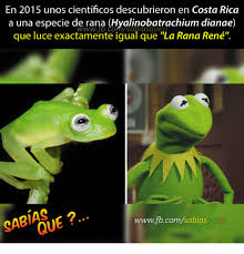 Memes Rana Rene - 25 best memes about la rana rene la rana rene memes