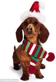 pet gift guide the best christmas presents for dogs and cats