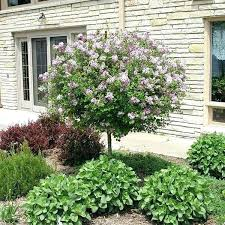 ornamental landscape trees best small landscape trees small