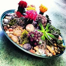 succulent and cacti dish garden in house garden design