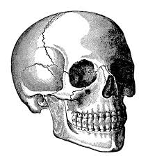 head skull clip art old design shop blog