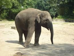 indian elephant baby by babypuk on deviantart