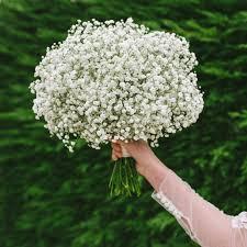 Wedding Bouquets Cheap The 25 Best Gypsophila Bouquet Ideas On Pinterest Gypsophila