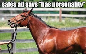 Meme Horse - 83 foolish horse memes