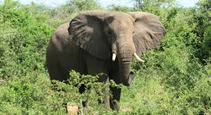 Tennessee wildlife tours images Elephant sanctuary in tennessee elephant eco tours jpg