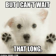 Can T Wait Meme - 20 can t wait memes for when you re feeling a bit impatient love