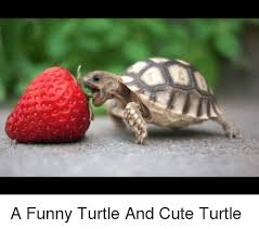 Funny Turtle Memes - 25 best memes about cute turtle cute turtle memes