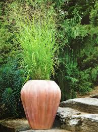 potted ornamental grass asian zen gardens grasses