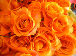 what is the meaning and history of orange roses orange roses
