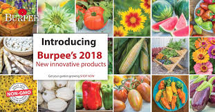 burpee seeds and plants home garden vegetable seeds annual