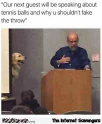 Funny Tennis Memes - our next guest is here to talk about tennis balls funny dog meme