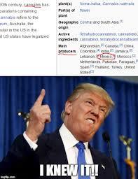 Meme Wikipedia - image tagged in donald trump trump mexicans wikipedia imgflip