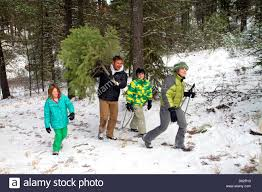 Cutting Christmas Tree - family cutting a christmas tree in the boise national forest near