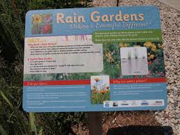 native plants for rain gardens somers rain garden village and town of somers