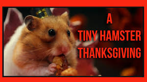 what does thanksgiving mean a tiny hamster thanksgiving ep 4 youtube