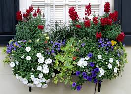 irresistible flower box ideas for your windows
