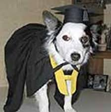 baby graduation cap and gown dog graduation cap gown