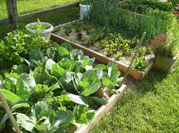 watering vegetable gardening in a raised bed 2048 latest