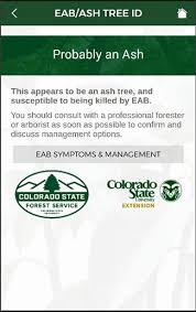 free app launched to help homeowners determine if trees