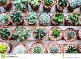 Types Of Indoor Plants Vaious Types Of Cactus Stock Photo Image 46311433