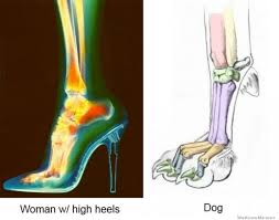 High Heels Meme - a woman s foot wearing high heels vs a dog s foot weknowmemes