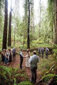 redwood forest wedding venue best 25 redwood wedding ideas on redwood forest