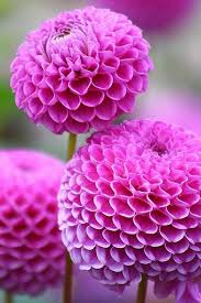 13 best flowers for the garden images on pinterest beautiful