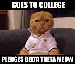 Anxiety Cat Memes - social anxiety cat meme segerios com segerios com