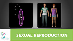 Which Is A Reproductive Cell Sexual Reproduction Youtube
