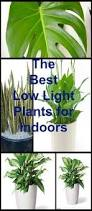 Fragrant Indoor Plants Low Light - 12 best plants that can grow indoors without sunlight sunlight