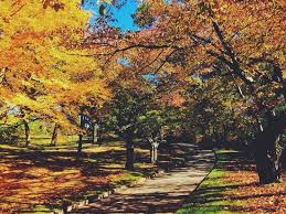 fall colors picture of high park toronto tripadvisor
