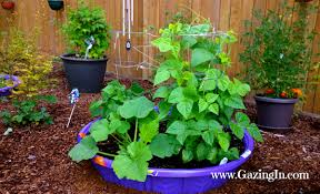 Types Of Garden Beans - swimming pool garden beds gazing in