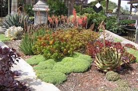 Best Rock Gardens Garden Project A Rock Garden Plants