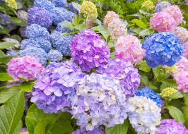 June Flowers - 2017 the best spots to enjoy japanese flowers in june live