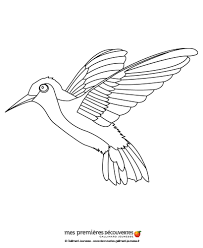 hummingbird coloring pages hellokids com