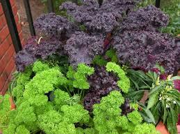 growing food through the cold season diy