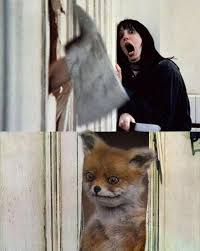 Stoned Fox Meme - stoned fox image gallery know your meme