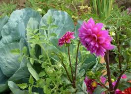 mixing foods and flowers in garden
