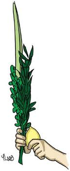 lulav and etrog for sale shaking the lulav etrog a for sukkot from the
