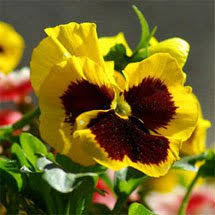 how to grow flowers planet natural