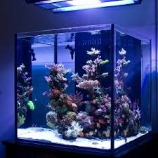 Reef Aquarium Lighting A Couple Of Things About A Nano Reef Tank