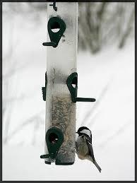 Backyard Wild Birds Feeding Wild Birds In Winter Gardens And What They Eat