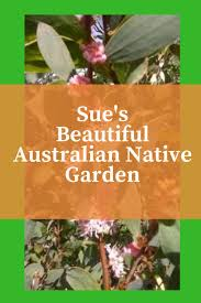 australian native plants pictures 54 best gardening with australian native plants images on