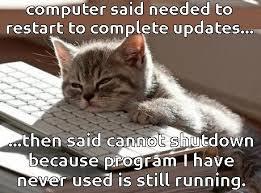To Kill A Mockingbird Cat Meme - amazing to kill a mockingbird cat meme meme of cat feels funny cats