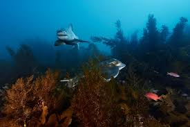 through a photographer u0027s lens sharks get a makeover