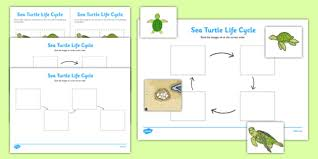sea turtle life cycle worksheets under the sea worksheets